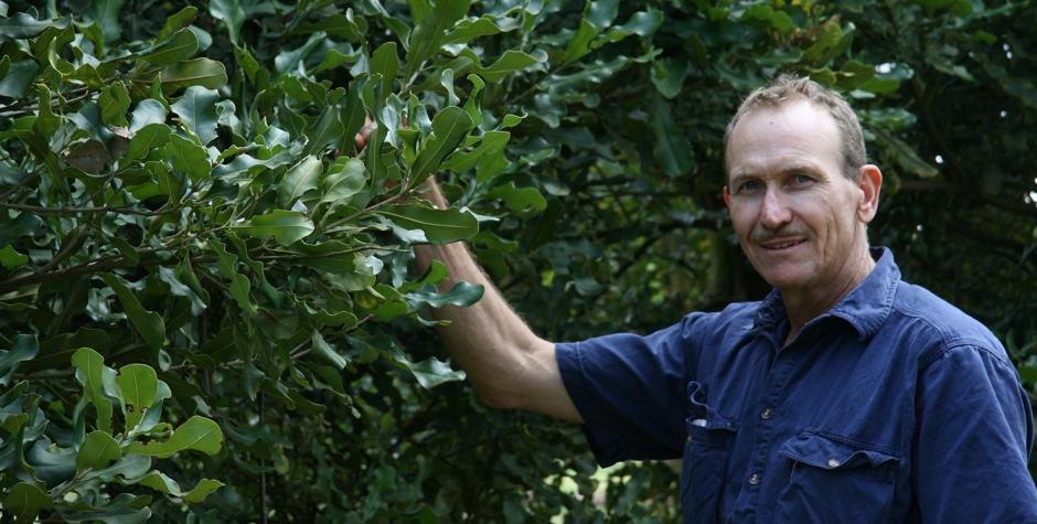 Wondaree Macadamias | Greg O'Neill