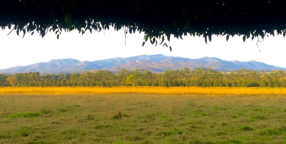 Wondaree Macadamias | Farm
