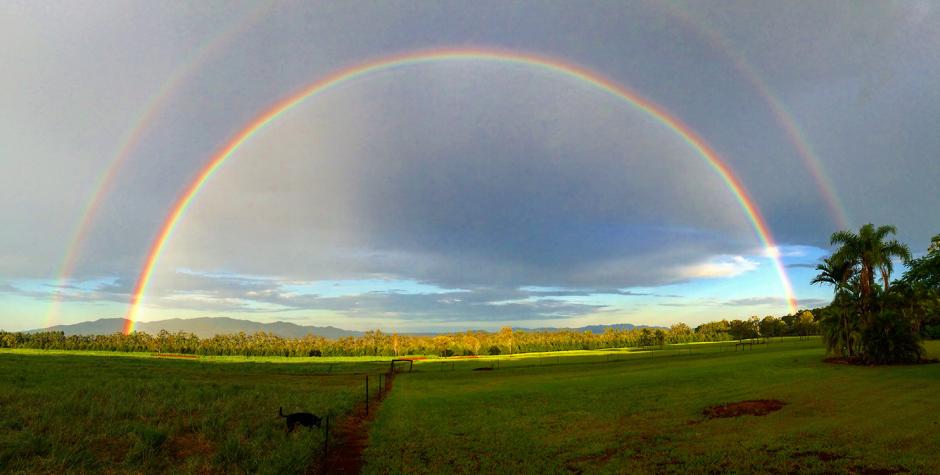 Wondaree Macadamias Farm View
