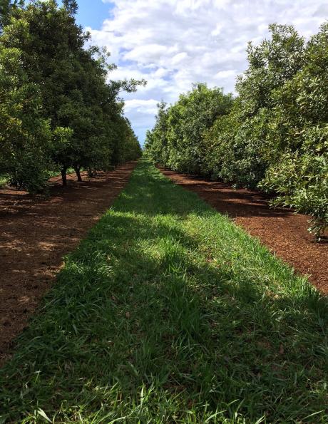 The Wondaree Orchard